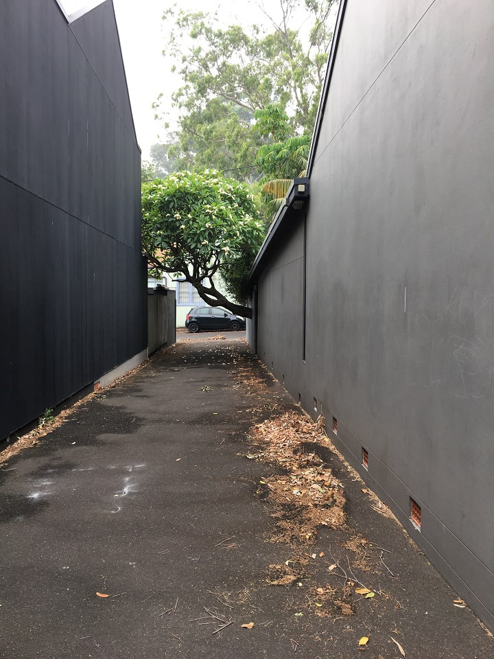 Inner city Sydney alley with frangipani growing at odd angle into path